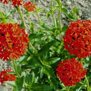 Летние цветы 10