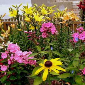 Цветы в июле 1