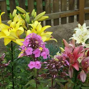 Июльские цветы 1
