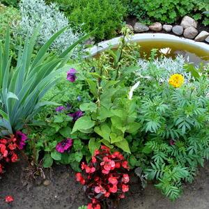 Цветы у водоема 2