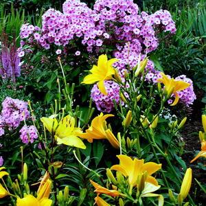 Август. Наши цветы 1