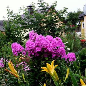 Дачные цветы 1. Цветник августа