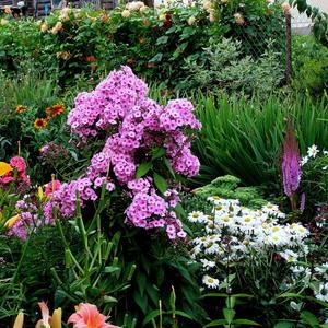 Цветочная компания. Цветник августа