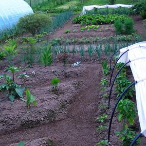 Огород на нашей даче