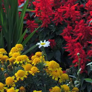 В осеннем цветнике