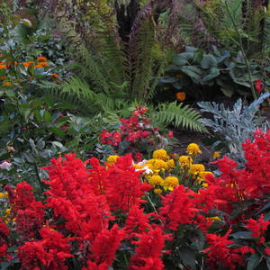 Цветочные композиции осени