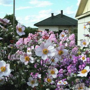 В стране цветов