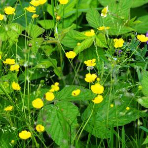 Летние луговые цветы