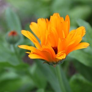 Оранжевое лето.