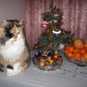Новогодний кошачий натюрморт