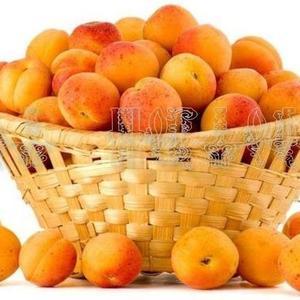 Саженцы, черенки для прививки Абрикос, сорт Лючак Чемальский (голоплодный)