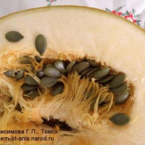 Семена тыквы. Тыква голосемянная (голозерная) «Лечебная»
