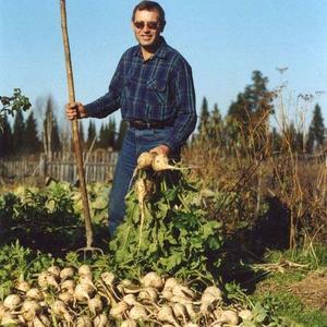 Семена овощей Пастернак сорта «Круглый» (Pastinaca sativa)