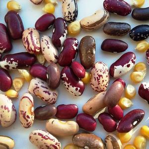 Фасоль и попкорновая кукуруза