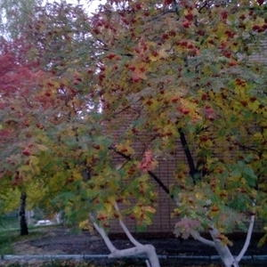 Осень уже во всей красе...