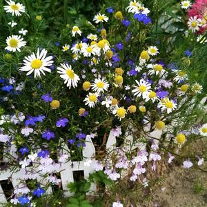 Красота скромных цветов