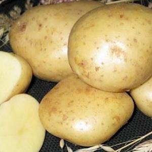 Картофель Юбилей Жукова.