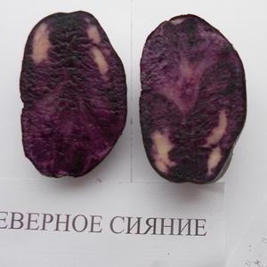 Картофель семенной Северное сияние