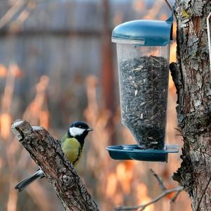 Кормушка для мелких птичек, сыпучего корма, семечек, зернышек