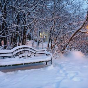 Утро в парке. После снегопада