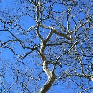 Пока нет листвы... Ломаные линии февральских деревьев