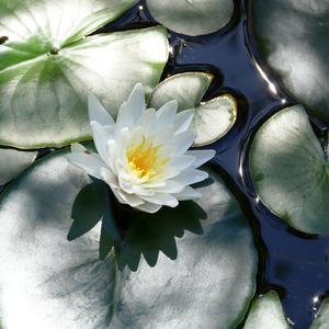 Цветок полуденного солнца
