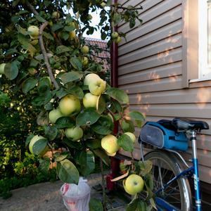Лето пролетело. Как на велосипеде увезти весь урожай?