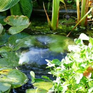Журчит фонтанчик в пруду