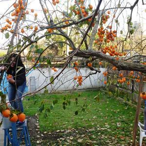 Поспели фрукты в саду у тёти Нелли!