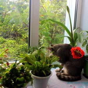 А за окном бушует май, и кот гостей нам намывает...