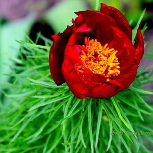 Цветы - цветы.... Они дают надежду.... Волшебный миг любой цветок несёт...