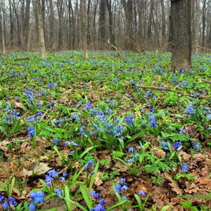 Весенний ковёр в зелёно-голубых тонах