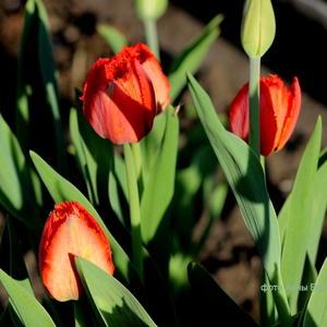 Цветы - роскошный дар природы. Душа завяла бы без них...