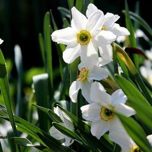 Люблю вдыхать неуловимый, Невинно-свежий аромат, И перламутр цветов ранимых, Прохладой чистою богат....
