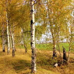 Это просто золотая осень!