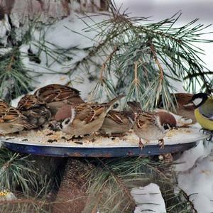 Покормите птиц зимой! Пусть у них тоже будет праздник!