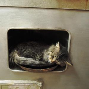 Вы не любите котов? Да вы просто не умеете их готовить!)))