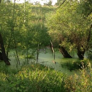 Мостик утонул, бобры плотину соорудили, вода поднялась