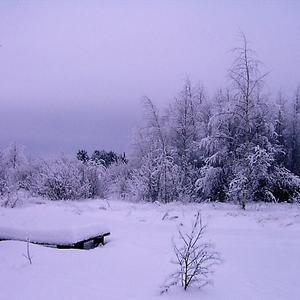 Старая скамейка в заснеженном лесу