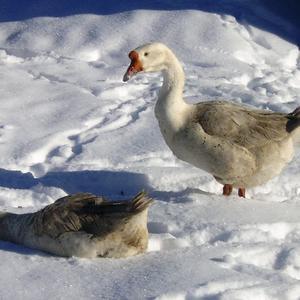 Снежные ванны полезны для здоровья!