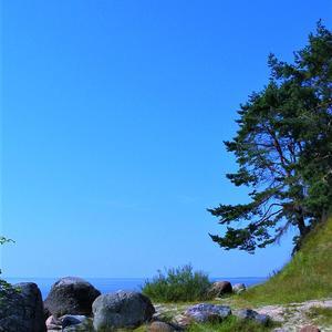 Синева июньского неба