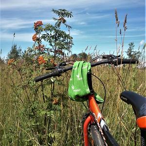 Я буду долго гнать велосипед, в глухих полях его остановлю ... И нарву оранжевой рябины!