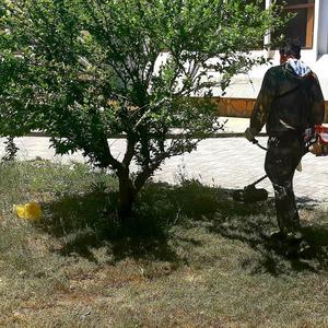 Небольшой у нас газон, но всегда в порядке он, это всё заслуга мужа, он с косилкой очень дружен:)