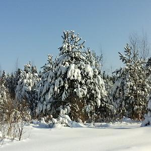 Снежная зимушка-зима