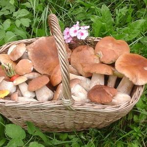 Корзина с белыми грибами