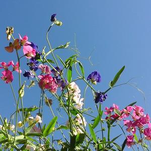 Летнее разноцветье