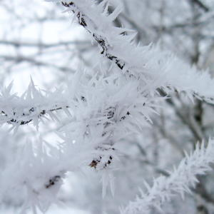Вот такие снежные иголочки наморозило!