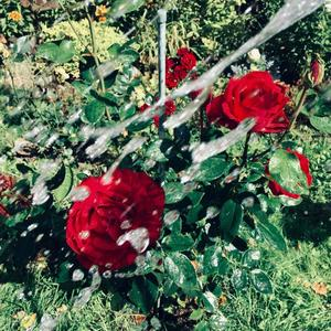 Вода и розы