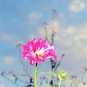 И споря с небесами красотой...