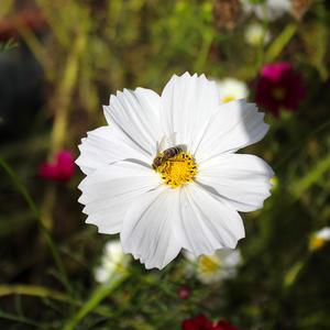 В последний солнечный денек еще даёт нектар цветок